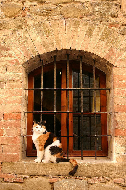 Castle Cat - Umbria Italy