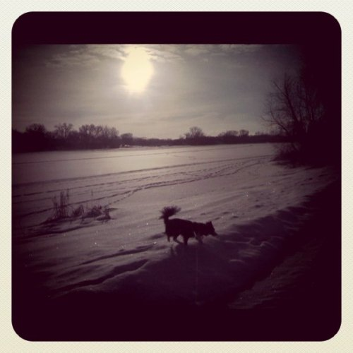 Morning walk in the tundra. (Taken with instagram)