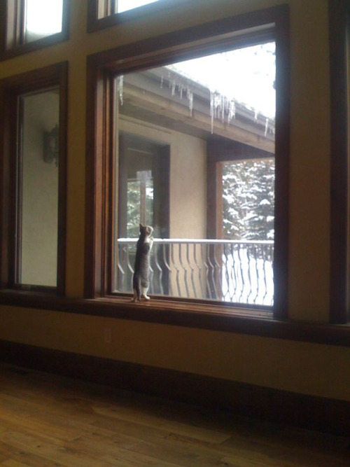 lazybookreviews:  Rain-Kitten loves watching snow.