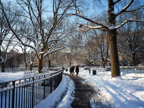 Tompkins Square Park. East Village, Manhattan.   (Clicking through the photo will take you to where it is located on Flickr where you can see larger versions and/or more information.)