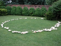 A fairy ring is a naturally occurring ring of mushrooms. They are also known as pixie's rings, faerie circles, or elf circles. The English believed that fairy rings were where fairies came to dance and celebrate, the mushrooms of the rings were used as stools for the fairies to recuperate during the evenings festivities. (OP)