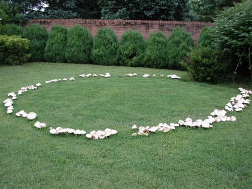 A fairy ring is a naturally occurring ring of mushrooms. They are also known as pixie's rings, faerie circles, or elf circles. The English believed that fairy rings were where fairies came to dance and celebrate, the mushrooms of the rings were used as stools for the fairies to recuperate during the evenings festivities.   First time I ever saw one of these things I didn't believe it was natural. I can easily understand why people might believe they had a supernatural origin.