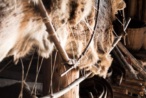 Furs in the longhouse at the conservation and education centre that I went to on Sunday.  Nikon D3000, Nikkor 18-55 VR ISO 800, 38mm, F5, 1/25sec, handheld