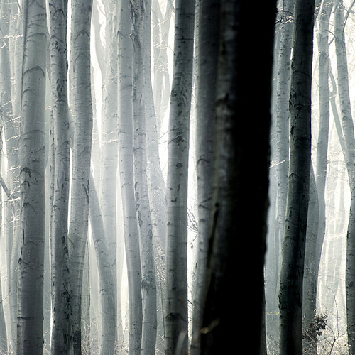 artchipel:  Akos Major - Woods [found at theantidote & loveyourchaos]