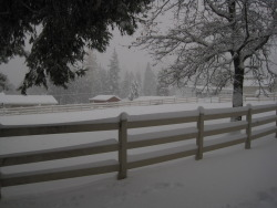 Winter at the ranch