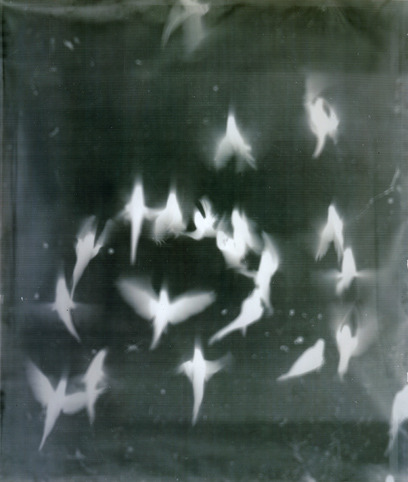 lushlight:  Adam FussFrom the series 'My Ghost' 1999 (Birds in Flight) 1999 Gelatin-silver print photogram Shadow Catchers at the V&A (camera-less photographs) Thank you Yama