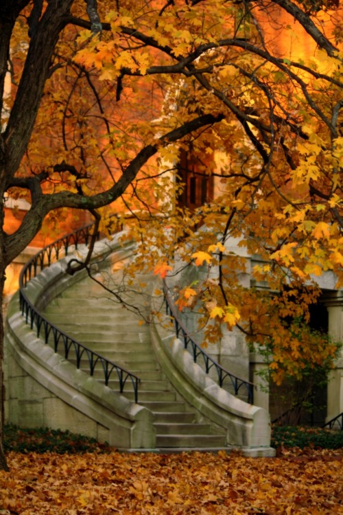 Stairway in Autumn, Vanderbilt University; Nashville, TN; fallingwater123