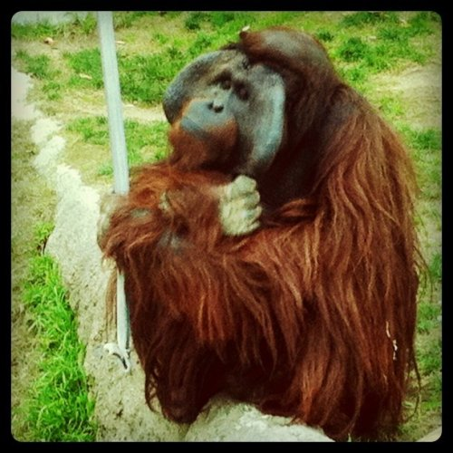 Thinking (Taken with Instagram at Los Angeles Zoo)