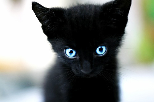 I WANNA KITTEH.