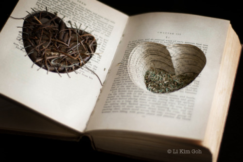 tatteredcover:  At the heart of it: gohlikim:  The inside of an old book that I altered. The title of the book is Seed, published in 1930.