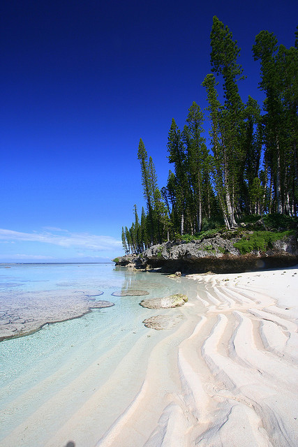 artsandletters:  Columnar Pines and a Beautiful Beach New Caledonia (by mathieu)