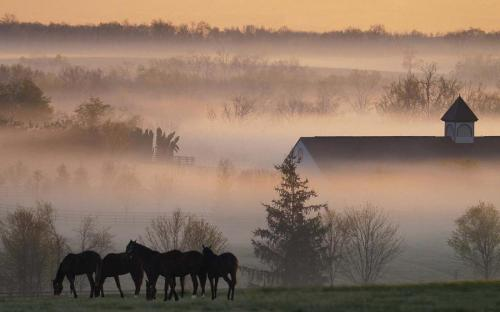 Kentucky Pride! Beautiful photo :) travelthisworld: a Kentucky farm submitted by: http://amagicalplacetobe.tumblr.com, thanks!