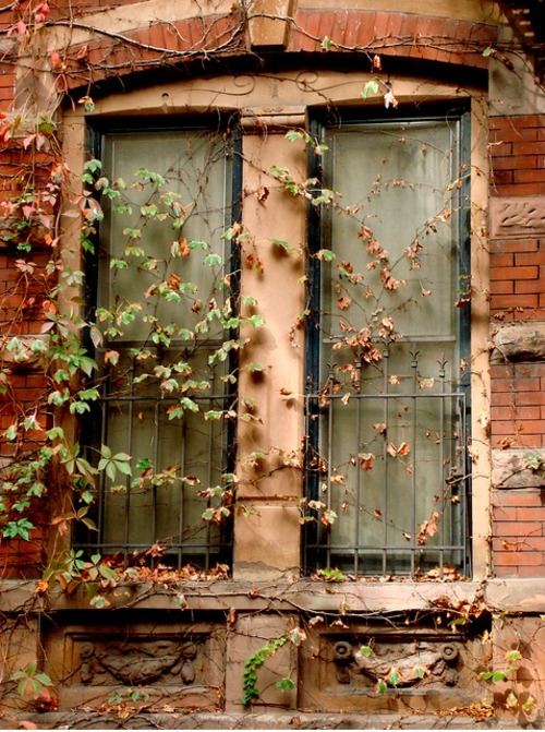 Brownstone Ivy