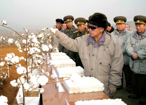 kimjongillookingatthings:  looking at a cotton plant