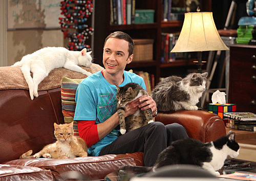 priicorreia:  SHELDON LOVE!