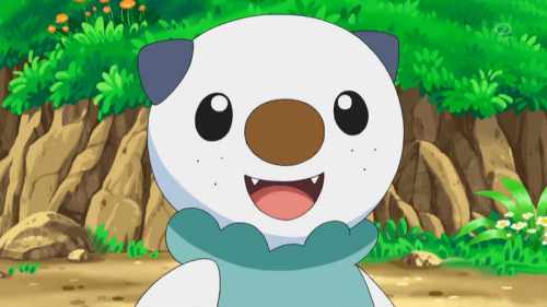 (English)Oshawott, (Japanese) Mijumaru Ash's new water pokemon for Pokemon Best Wishes Moves it knows now: Tackle, Aqua Jet, Shell Blade& Water Gun