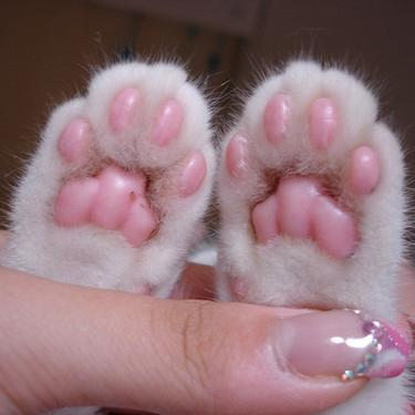 Squishy Kitty Toesvia: buzzfeed.comIcyCute