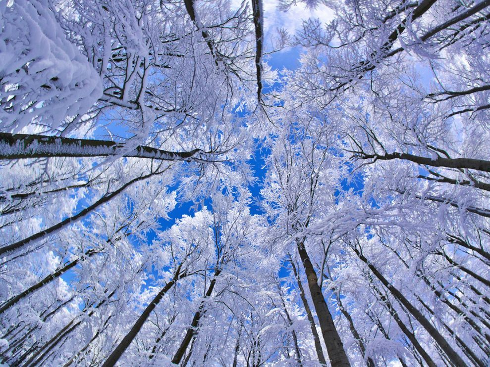 Beech forest in wintertime. Fichtelgebirge, Bavaria, Germany. Photograph by Martin Hertel