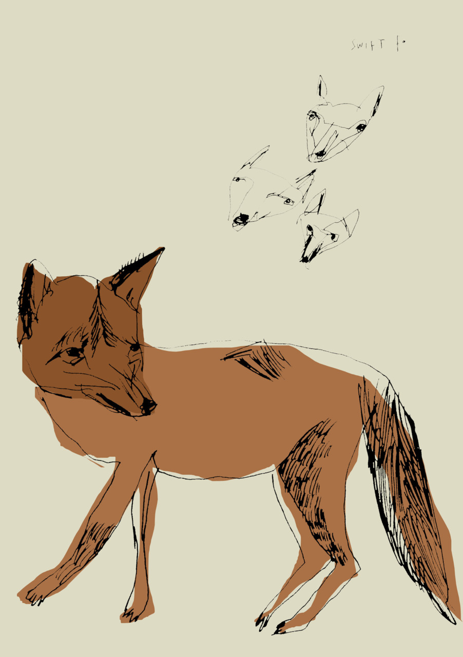Swift Fox.