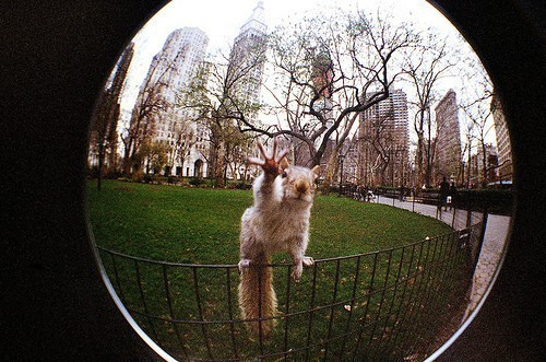 photojojo:  Holy heck, what a great fisheye shot! High five, little dude. (Message us if you know who took this!)