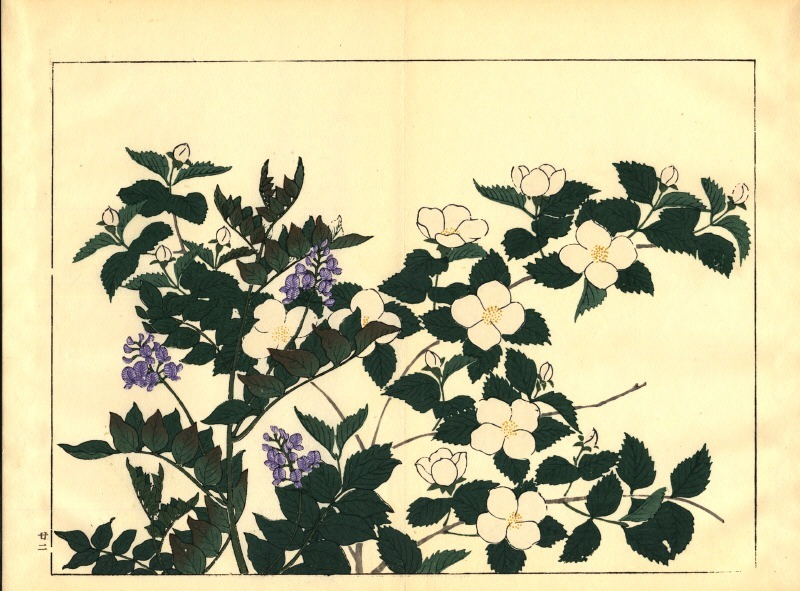 Unknown 1908-, Flowers, Japan