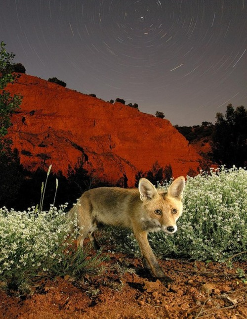 magicalnaturetour:  Javier Alonso Photographer
