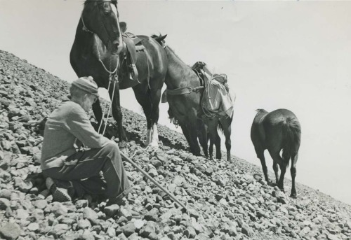 Eric Pearson's climbing partner with team of horses on Mt. Adams, circ. 1938. Photo: E.H. Pearson