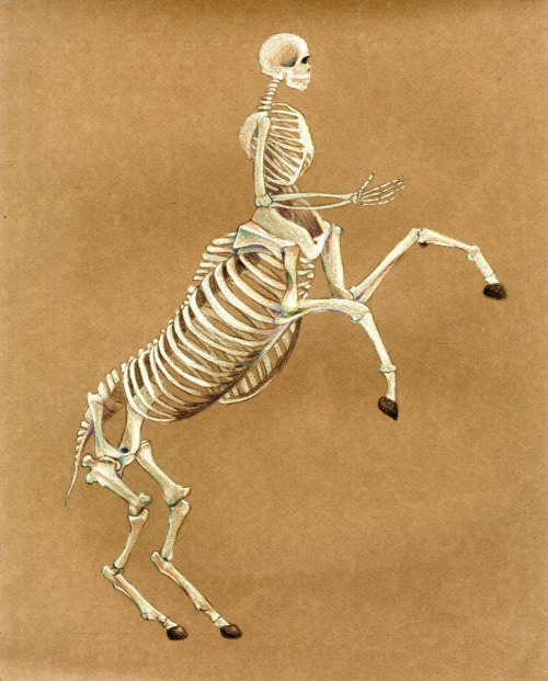 Centaur Skeleton - Fantasy Skeleton Study