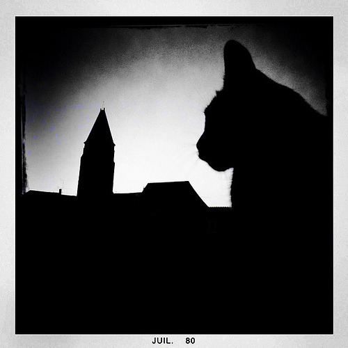 I'm being followed by a cat shadow,cat shadow,cat shadow …