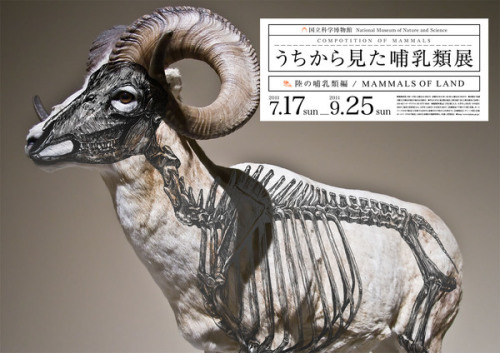 wreckeddesign:  Composition of Mammals by Wataru Yoshida Amazing. Check it.