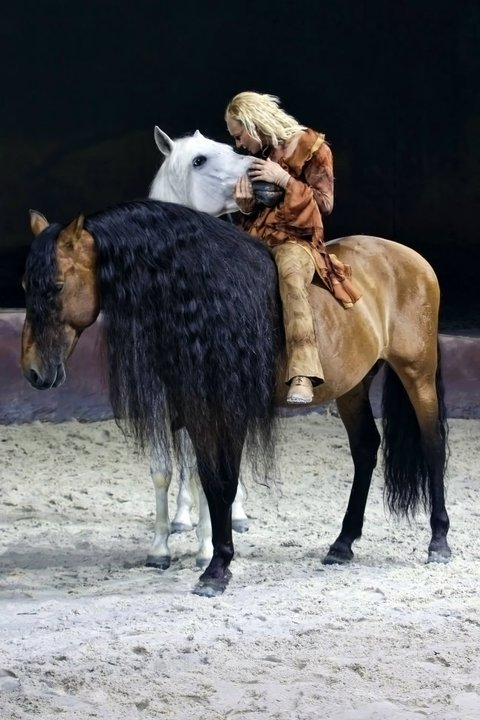 classicalhorse:  A little eye candy to start February off right!