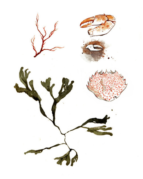 Watercolor sketches from the seashore.Print here.