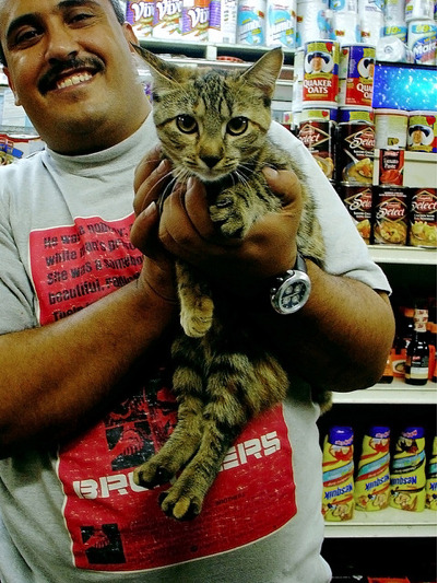notsayingboo:  ISO the perfect bodega cat/ neko cafe combo. That is, street smart + book smart.