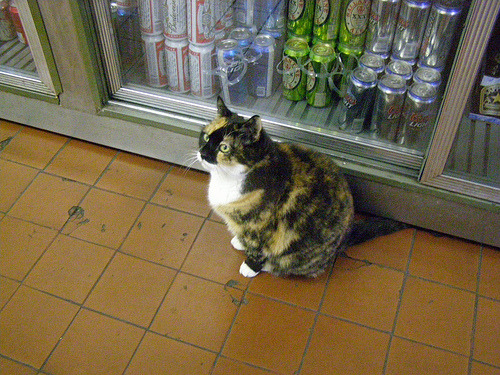 west village, anonymous, crazy/awesome/calico manhattan bodega cats are fancy.