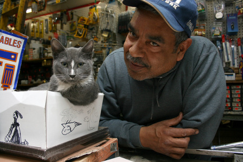bodega cats can also live in hardware stores.