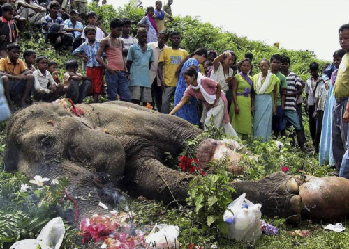 canabisexu4l:   People leave flowers/offerings for a dying elephant  This is probably the most depressing thing I've ever seen on tumblr and I use to run a suicidal blog .  you think this is depressing, youtube videos of other elephants mourning dying or dead elephants
