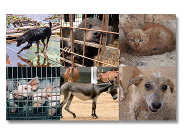 I support the WSPA (World society for protection of animals).  I don't give them a large amount, but I do it every month.I really wish I could give more, but I physically can't. If you've got any spare change, throw it their way. http://www.wspa.org.uk/