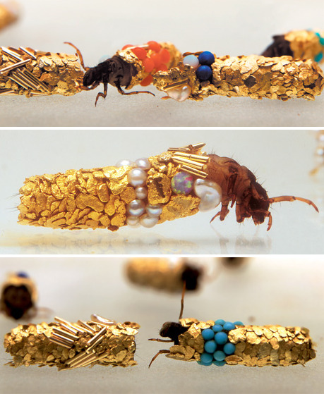 meepmeepmeep:  Caddis fly larvae are known to incorporate bits of whatever they can find into their cocoons, be it fish bone or bits of leaves. Hubert Duprat gave them gold, turquoise, gems and pearls.