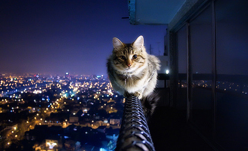 photojojo:  When you have nine lives, you can do stuff like this to get good photos.  Can't decide which is better, the photo or the caption.