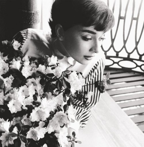 Audrey Hepburn, on her first trip to Hollywood, looks out the window of  her hotel room. Chapman Park Hotel, Los Angeles, CA, 1953. photo by Bob Willoughby