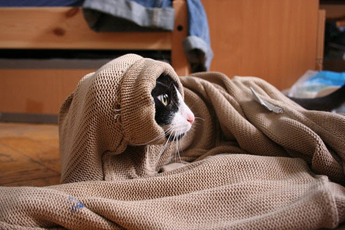 From the creators of The Hurrito. The Purrito.