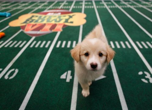 Puppy Bowl time!!!