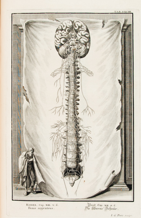 "Illustration from ""Physica Sacra"", Johannes Jacob Scheuchzer, 1735"