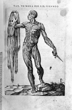 /// Standing male écorché, showing musculature. Juan Valverde de Amusco, 1556.