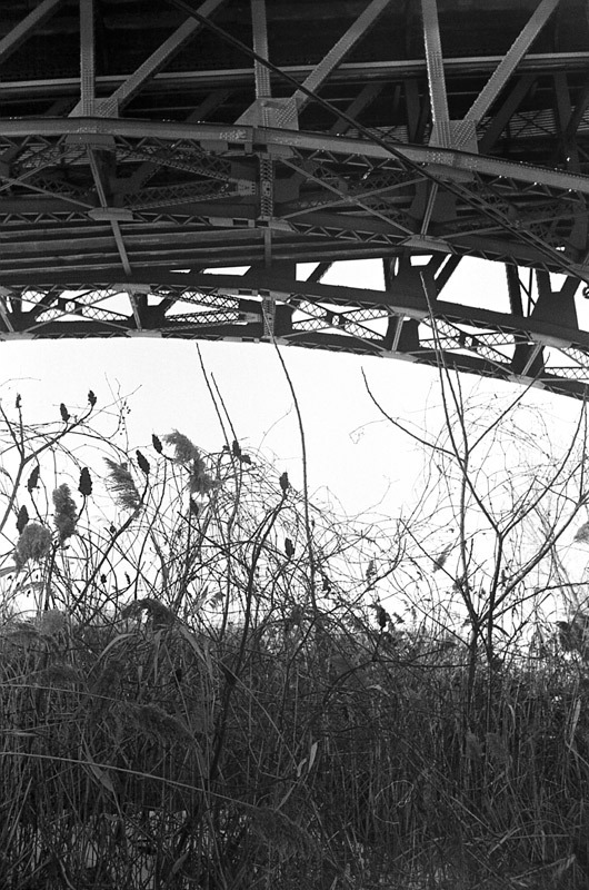 weeds under the bridge