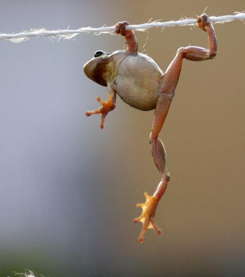 Some days, you're just hangin' on by a string.