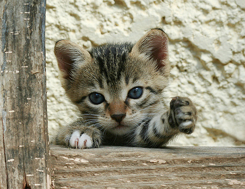 magicalnaturetour:  …And 2 Milk, please…..(Feral / Stray kitten) by Roeselien Raimond