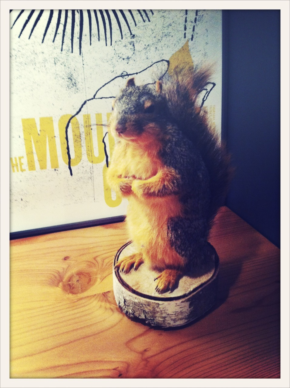 helloinstrument:  Justin found and brought in a squirrel.