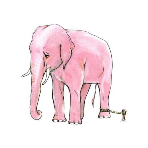 "something2familiar:   ""When the elephant is young and relatively weak, it is tied to an immovable stick. So later, no matter how large and strong he becomes…he continues to believe that he cannot free himself.Many intelligent people are like circus elephants. They never question their self-imposed limitations."" - Cold souls"