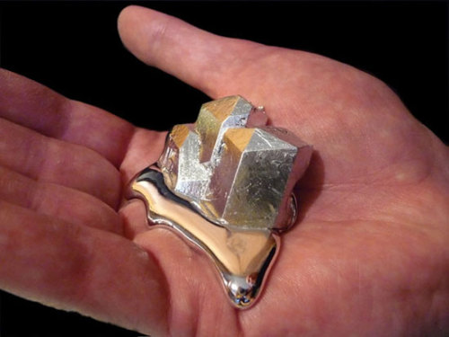 "theroaringsilence:  Gallium || Ga  This element is so interesting to me. It has a melting temperature of about 85 degrees Fahrenheit, which is basically room temperature. If you hold this metal it will begin to melt in your hand.  ""Its melting point is used as a temperature reference point."""